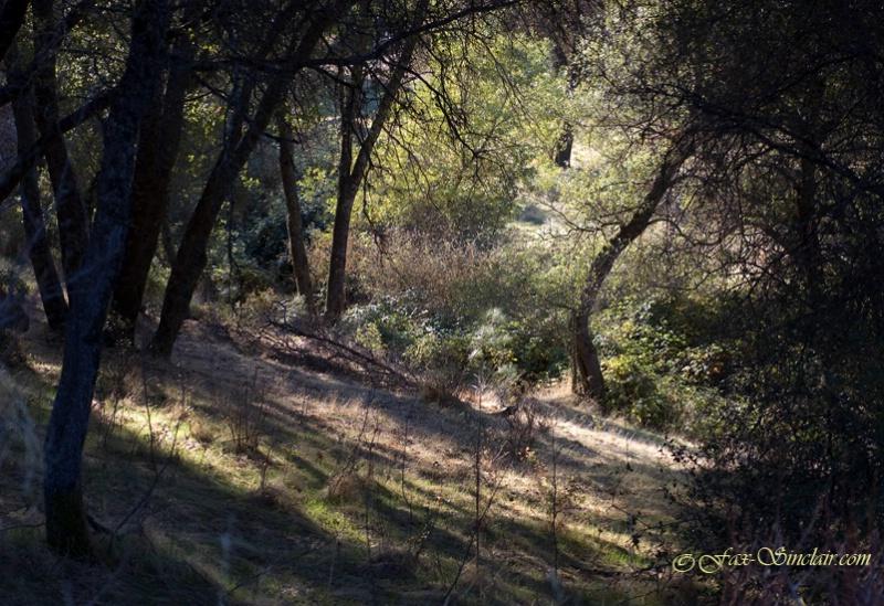 Mariposa Treescape 1