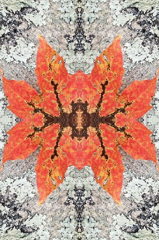 Fall Leaf on Rock--Kaleidoscope