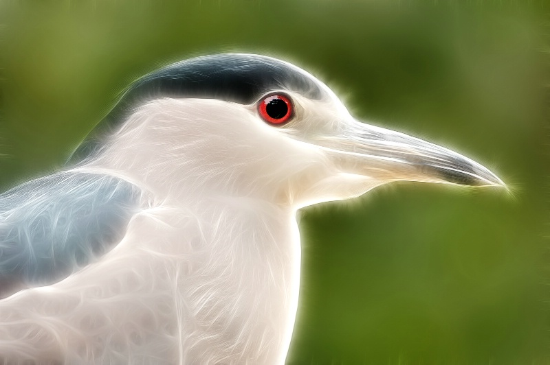 Night Heron--Fractalius 94