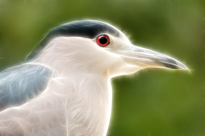 Night Heron--Fractalius 94