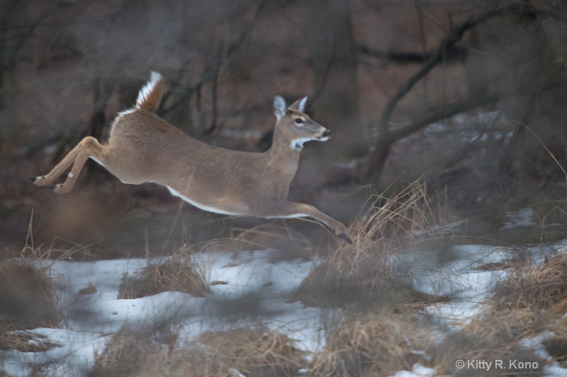 Deer Leaping at Valley Forge