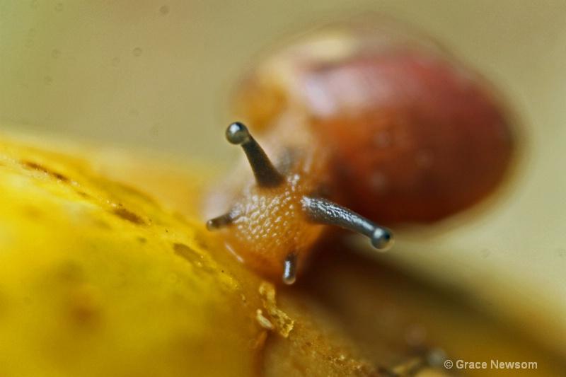 What a slug!