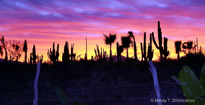 Baja Sunrise over the fence