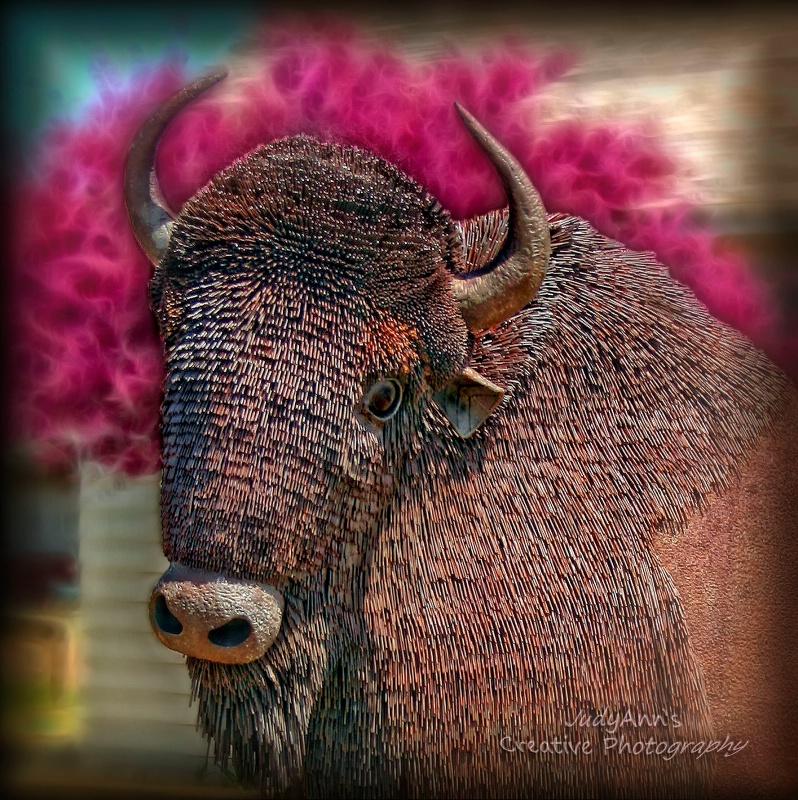 Mr. Bison