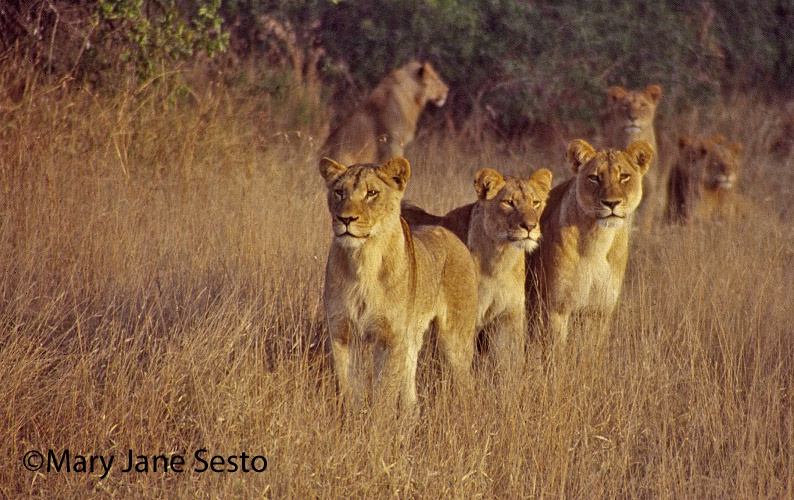 Y.Lions, South Africa