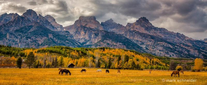 Golden Pastures