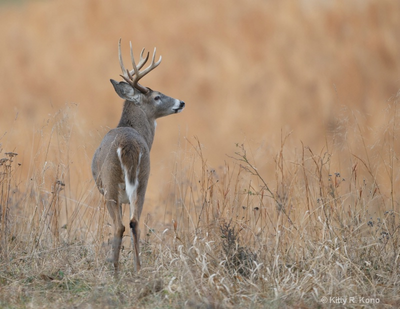 Eight Pointer in the Field