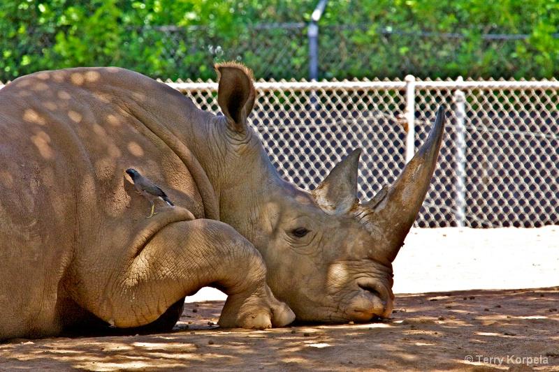 the Myna and Rhino Honolulu zoo
