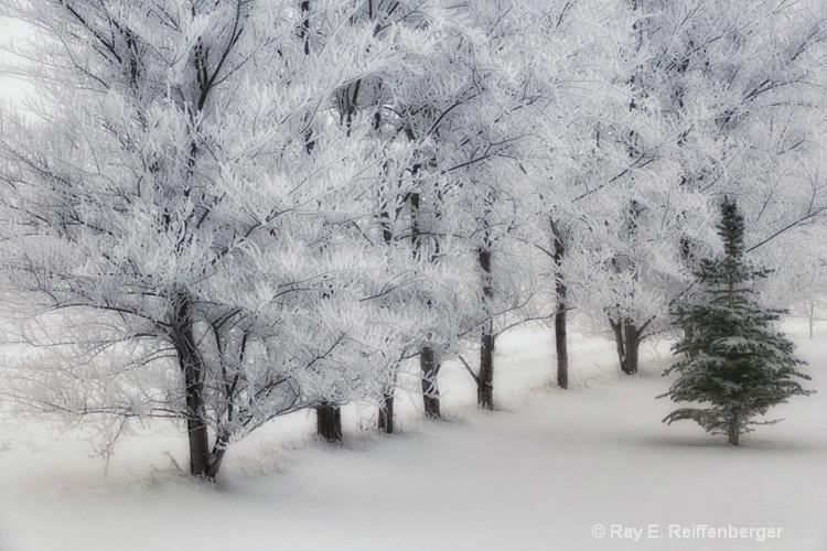 h0c9354 Winter 12