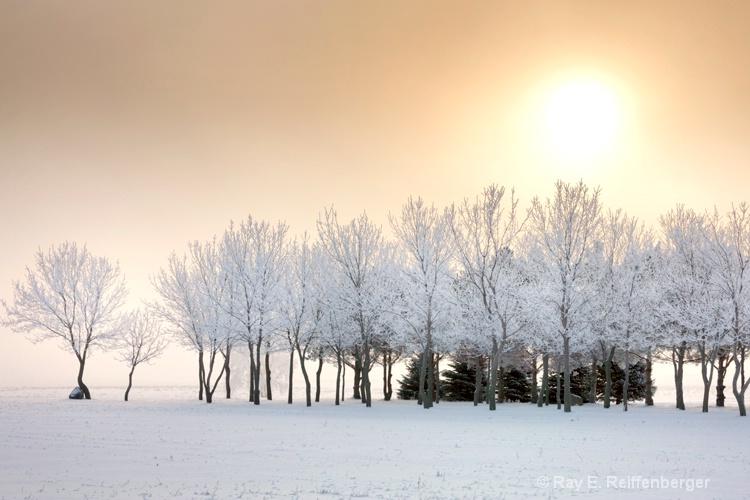 h0c9398 Winter 12