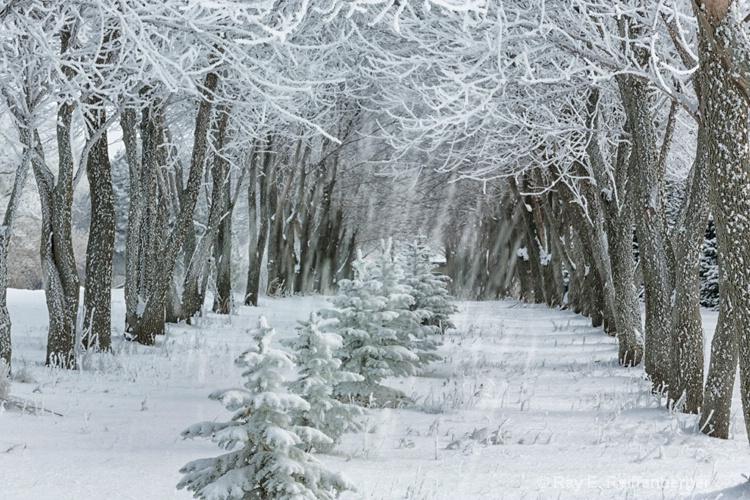 h0c9538 Winter 12