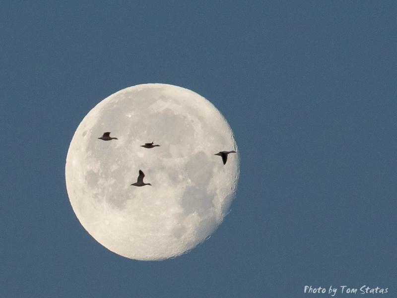 Full Moon Risin'
