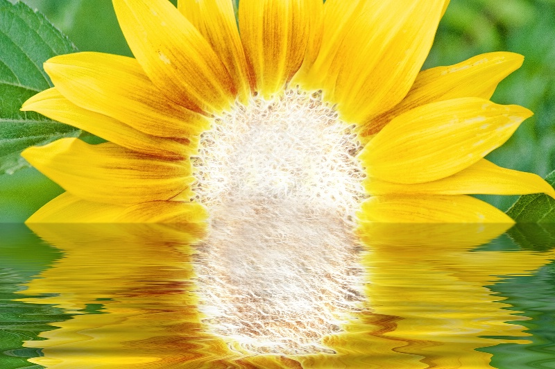Rising Sunflower -- Fractalius