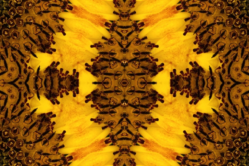 Abstract of a Sunflower