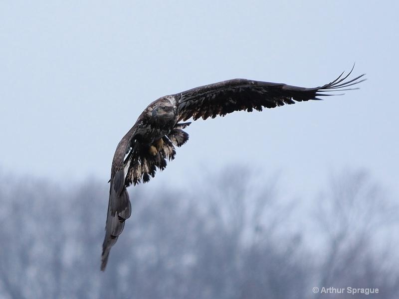 eagle 38