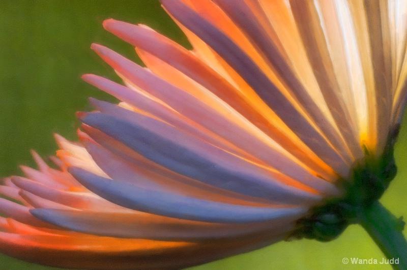 Absrtact Flower