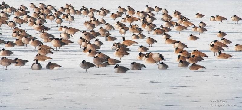 hunts pond birds