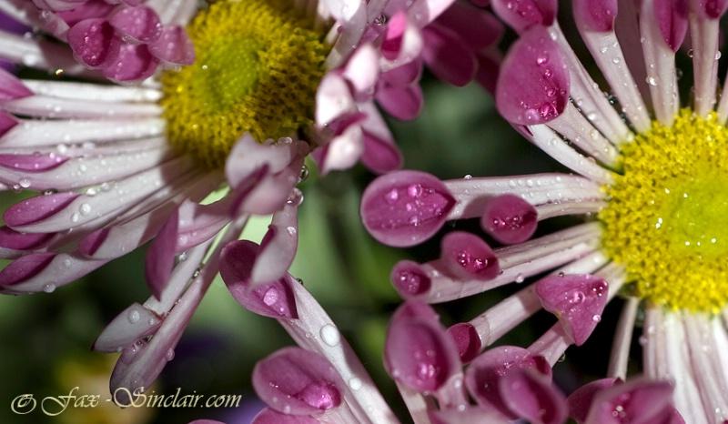 Little Spoons Flower - Natch