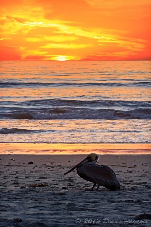 Ponto Pelican