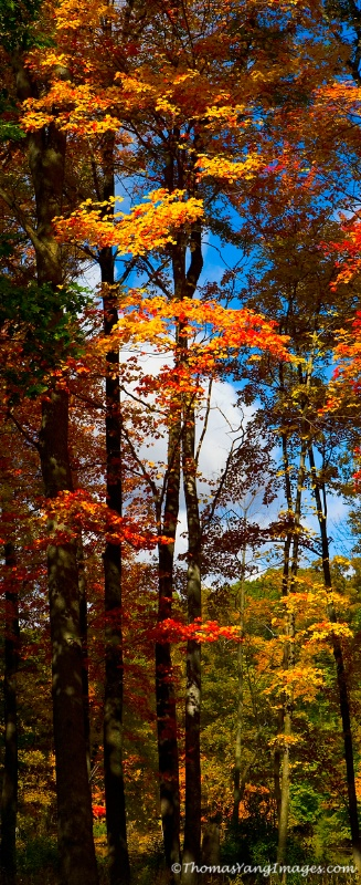 Fall Colors-Vertical Pano