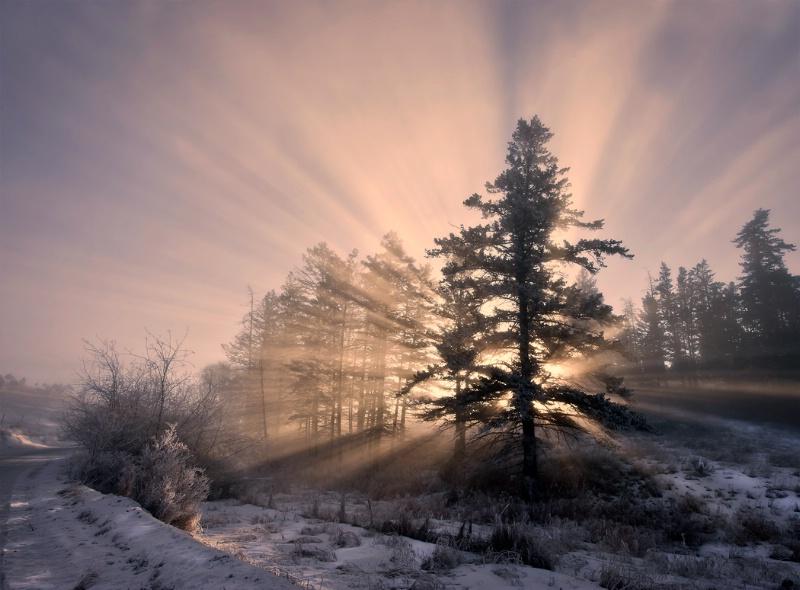 """Enchanted Rays"""