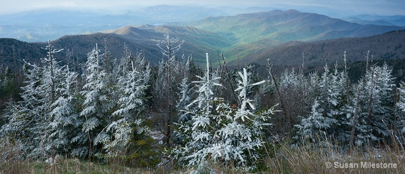 Clingmans Dome Rime Ice Pan1