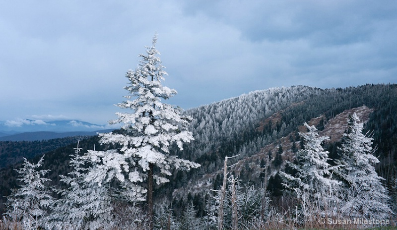 Clingmans Dome Rime Ice 4321