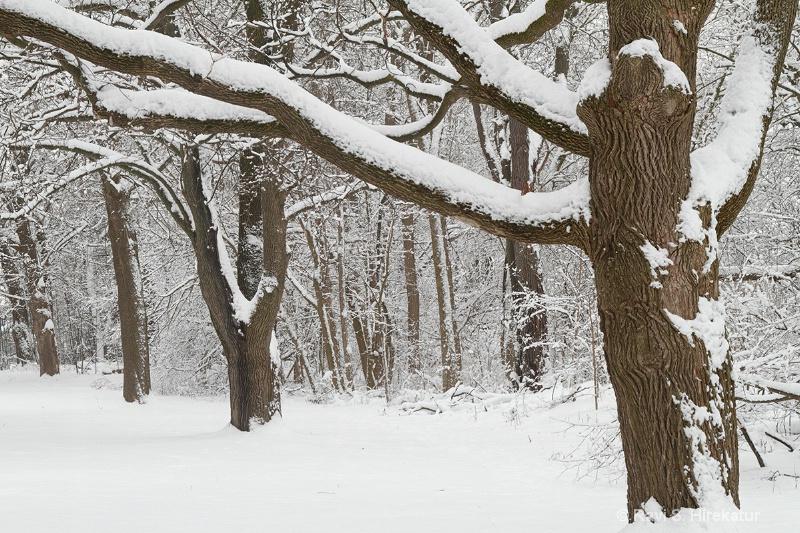 Snow covered vegetation