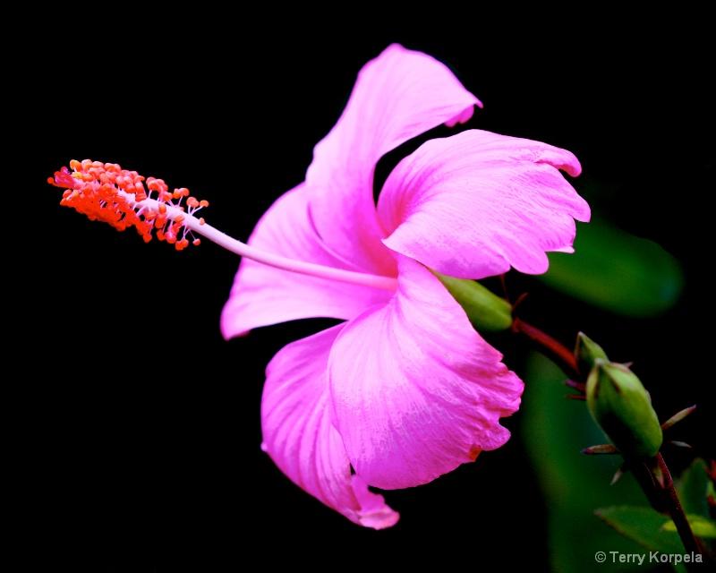 Hilo Tropical Botanical Garden Hawaii