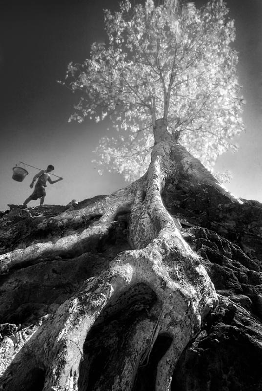 Man & Tree