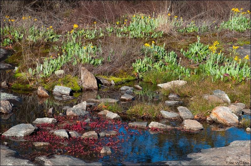 Spring Landscape II
