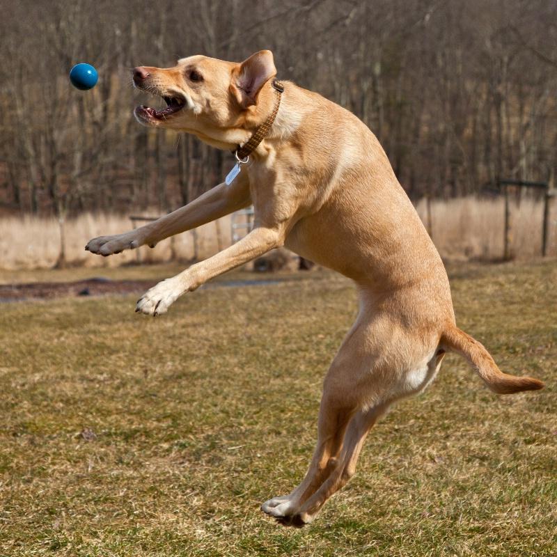 Buddy Playing Ball