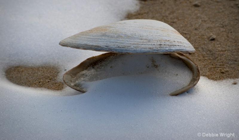 Snowy Shell