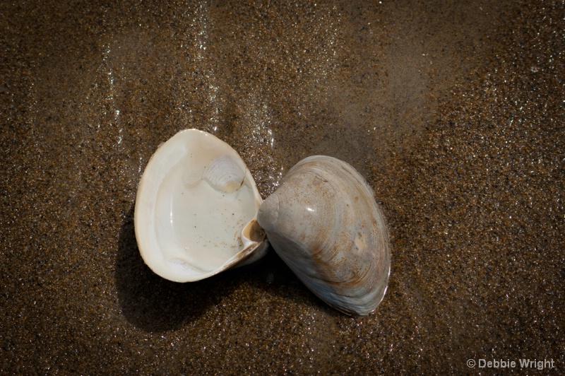 Split Shell