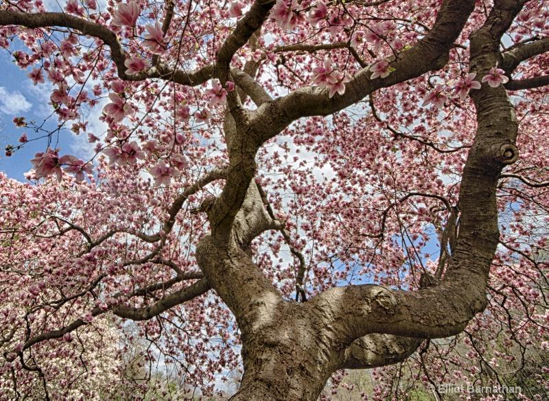 Spring in Philadelphia 29