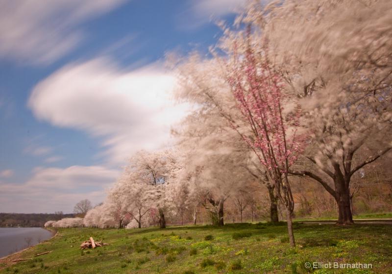 Spring in Philadelphia 27