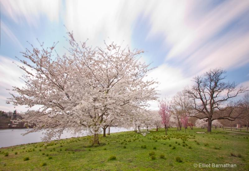 Spring in Philadelphia 25