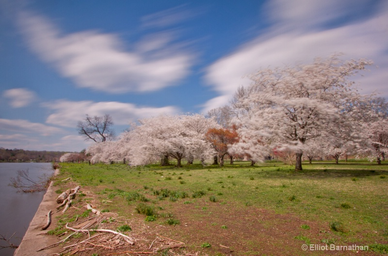 Spring in Philadelphia 23