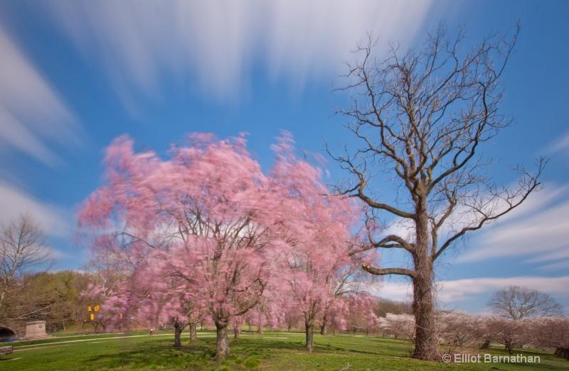 Spring in Philadelphia 22