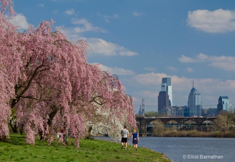 Spring in Philadelphia 19