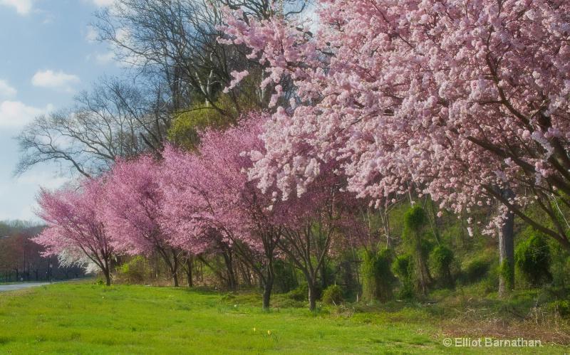Spring in Philadelphia 16