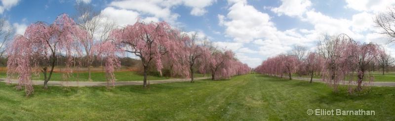 Spring in Philadelphia 2