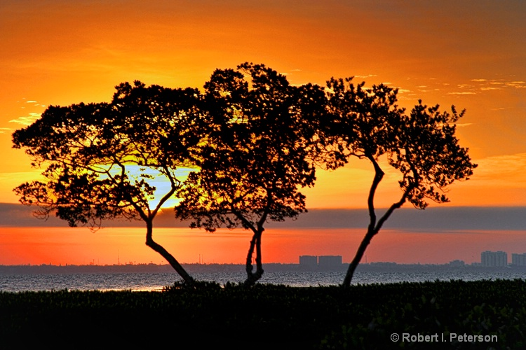 tree fire sunrise