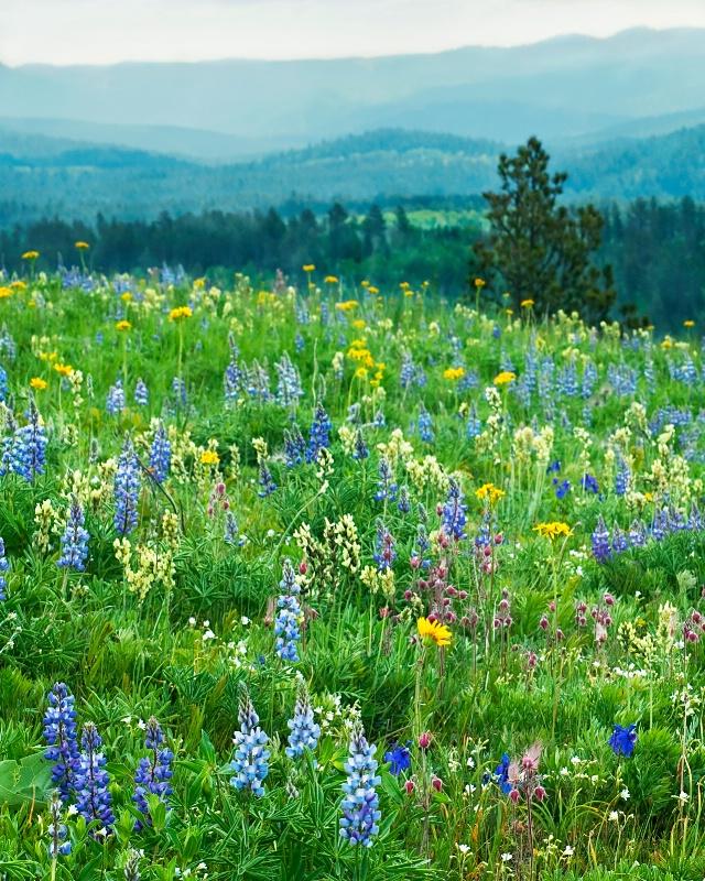 Flowery June at Cement Ridge
