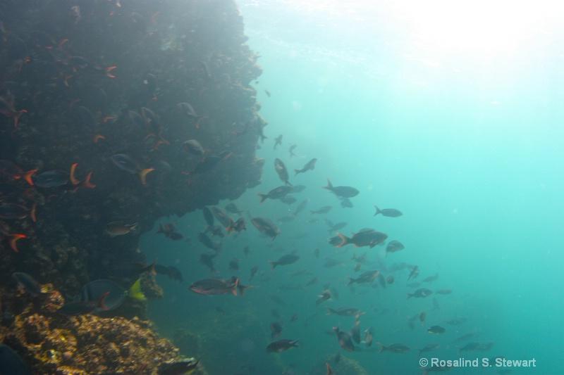 galapagos-underwater-129