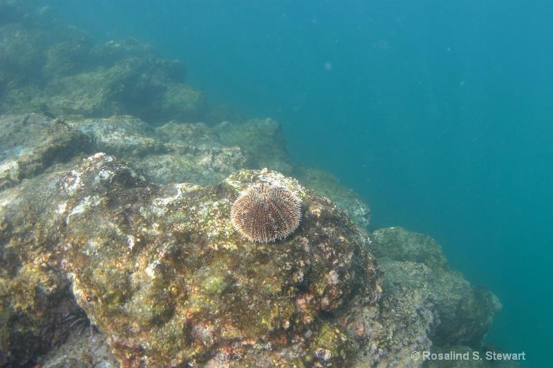 galapagos-underwater-141