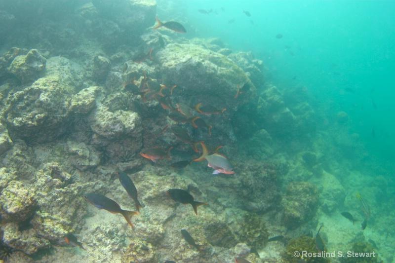 galapagos-underwater-142