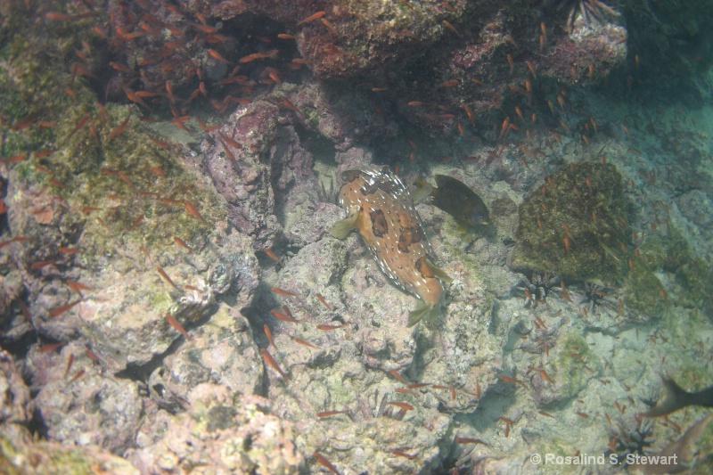 galapagos-underwater-151