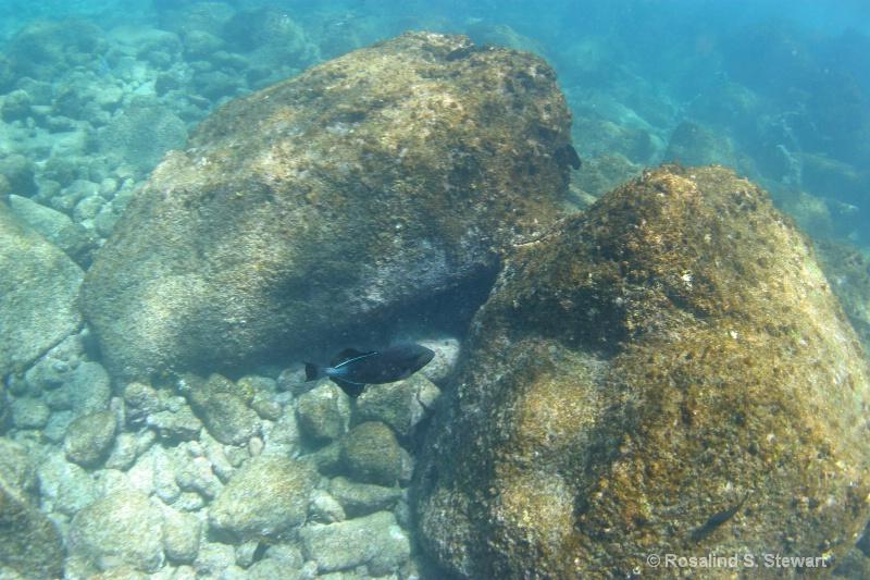 galapagos-underwater-176