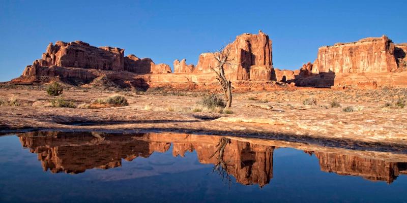 Rain Pool Reflections